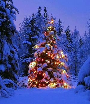 ILC-blog-Christmas-2015